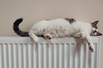 katt värmer sig på element